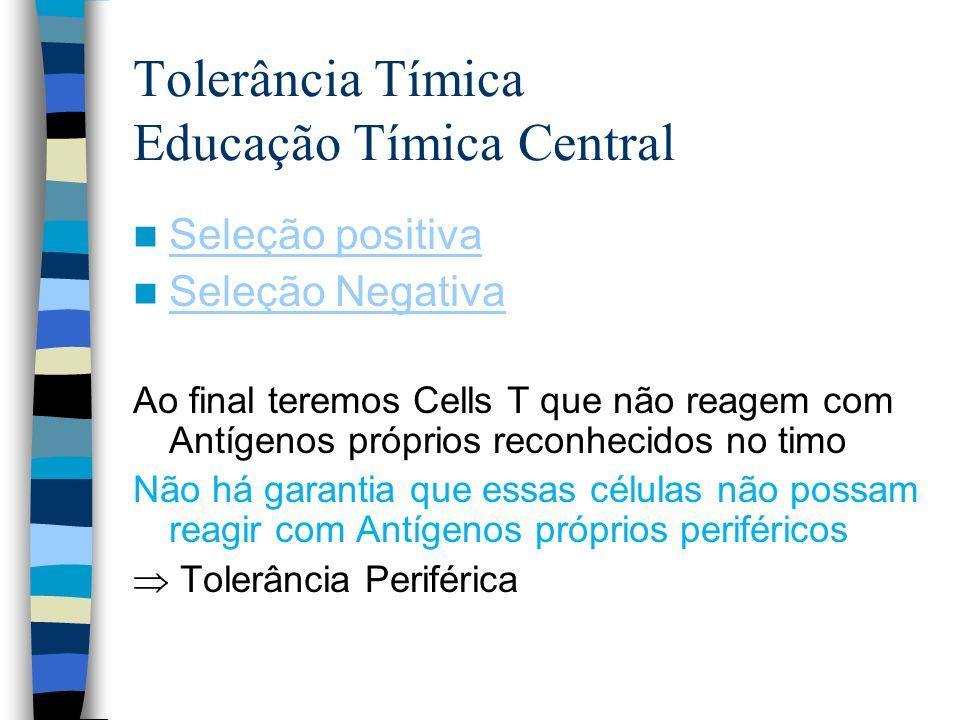 Tolerância Tímica Educação Tímica Central Seleção positiva Seleção Negativa Ao final teremos Cells T que não reagem com Antígenos próprios reconhecido