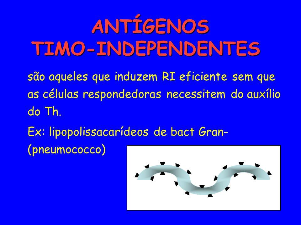 ANTÍGENOS TIMO-INDEPENDENTES ANTÍGENOS TIMO-INDEPENDENTES são aqueles que induzem RI eficiente sem que as células respondedoras necessitem do auxílio