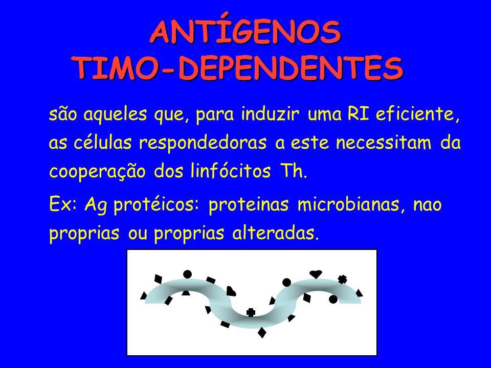 ANTÍGENOS TIMO-DEPENDENTES ANTÍGENOS TIMO-DEPENDENTES são aqueles que, para induzir uma RI eficiente, as células respondedoras a este necessitam da co