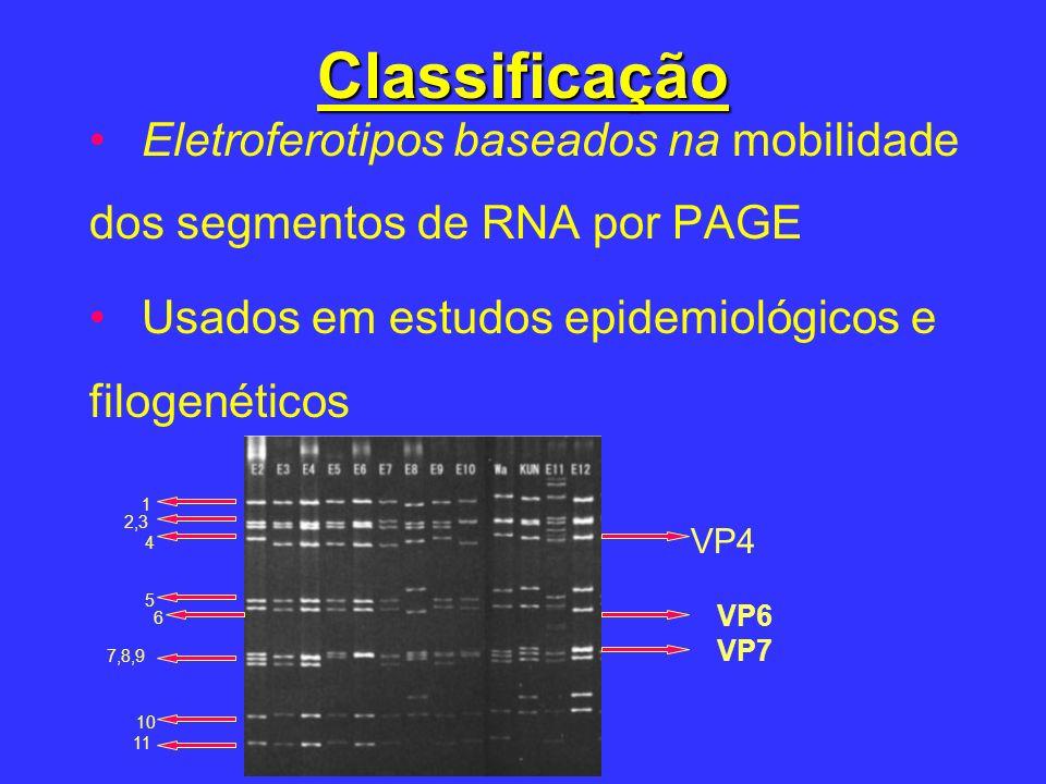 Classificação Eletroferotipos baseados na mobilidade dos segmentos de RNA por PAGE Usados em estudos epidemiológicos e filogenéticos VP4 VP7 1 2,3 4 5