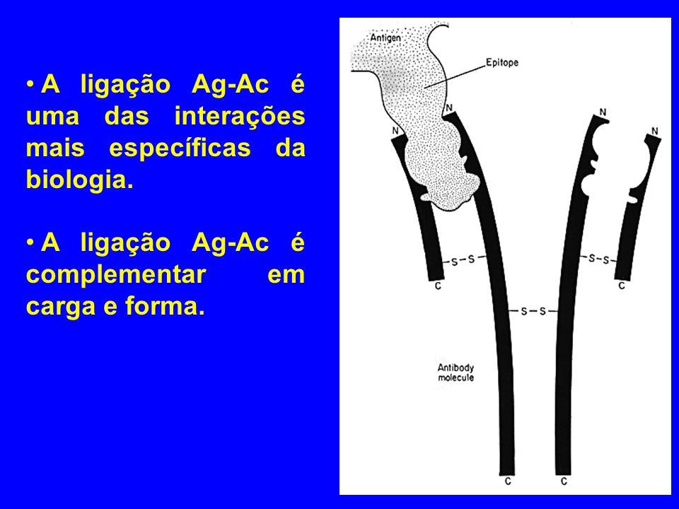 A ligação Ag-Ac é uma das interações mais específicas da biologia. A ligação Ag-Ac é complementar em carga e forma.
