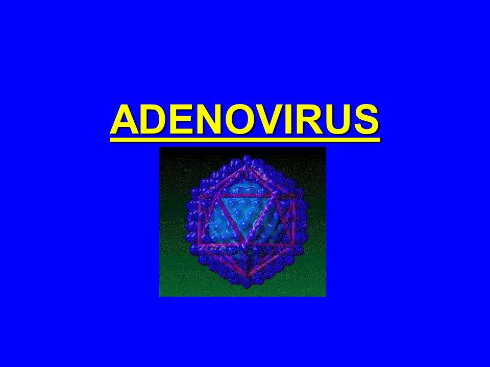 ADENOVIRUS Vírus de DNA isolados inicialmente de tecidos de adenóides em 1953