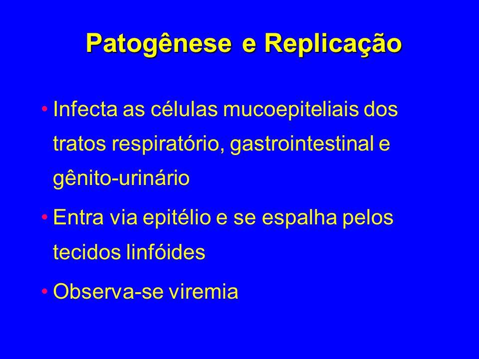 Patogênese e Replicação Infecta as células mucoepiteliais dos tratos respiratório, gastrointestinal e gênito-urinário Entra via epitélio e se espalha
