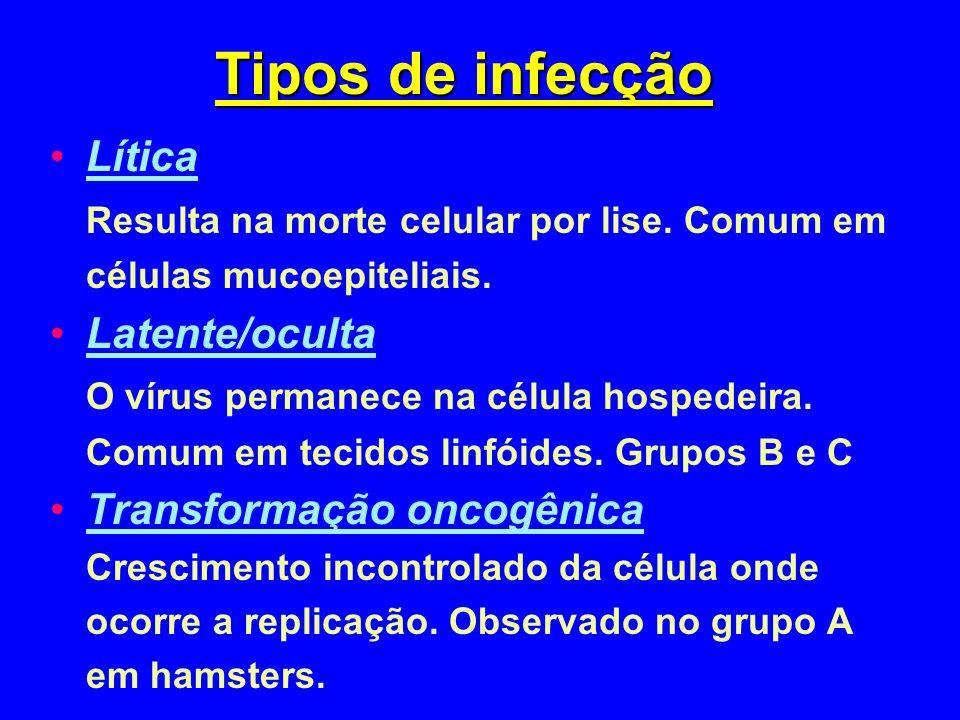Tipos de infecção Lítica Resulta na morte celular por lise. Comum em células mucoepiteliais. Latente/oculta O vírus permanece na célula hospedeira. Co
