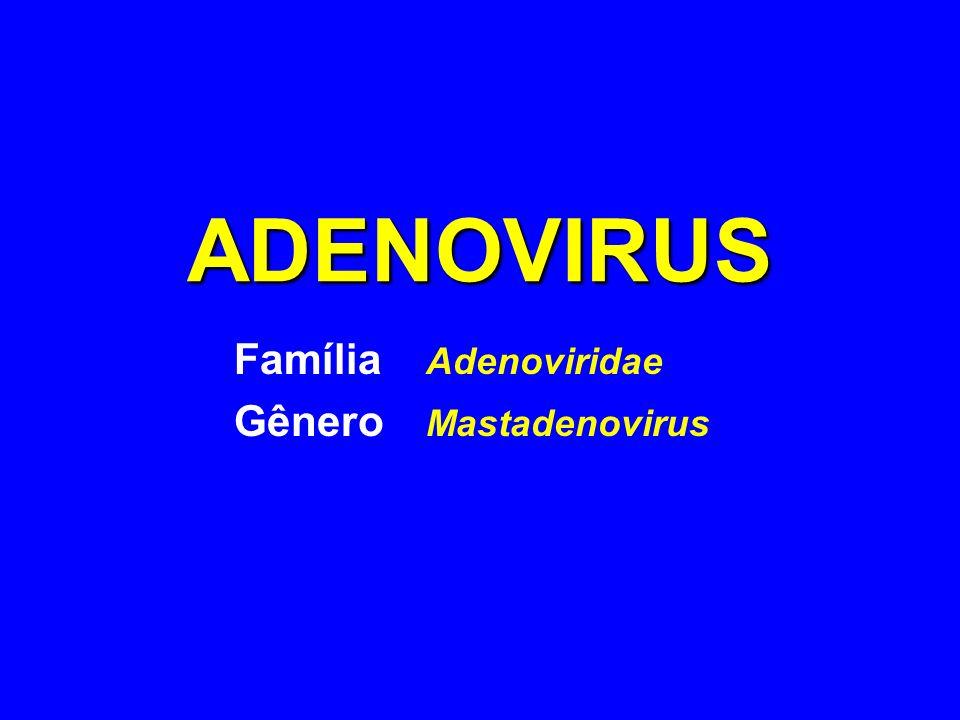 ADENOVIRUS ADENOVIRUS - Classificação Subdivididos em 6 subgrupos (A-F) baseados na propriedades de hemaglutinação 49 sorotipos Sorotipos mais comuns:- 1-8, 11, 21, 35, 37, 40 Os entéricos pertencem ao subgrupo F