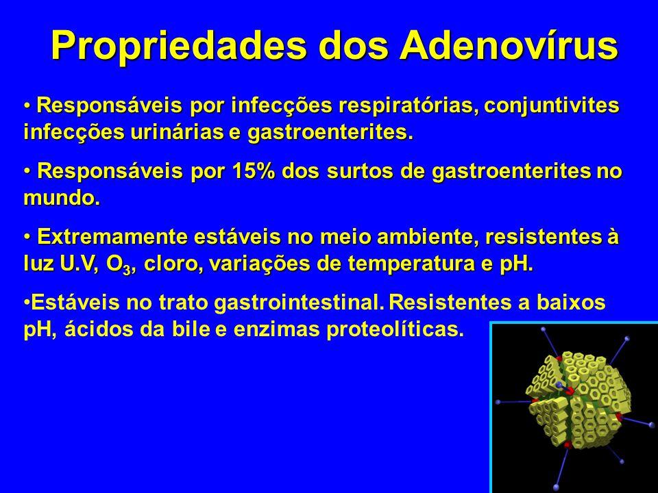 Propriedades dos Adenovírus Responsáveis por infecções respiratórias, conjuntivites infecções urinárias e gastroenterites. Responsáveis por infecções