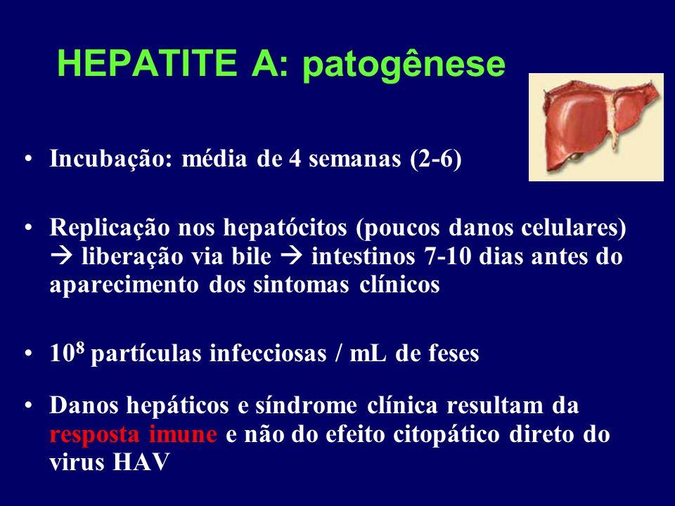 HEPATITE A: patogênese Incubação: média de 4 semanas (2-6) Replicação nos hepatócitos (poucos danos celulares) liberação via bile intestinos 7-10 dias antes do aparecimento dos sintomas clínicos 10 8 partículas infecciosas / mL de feses Danos hepáticos e síndrome clínica resultam da resposta imune e não do efeito citopático direto do virus HAV