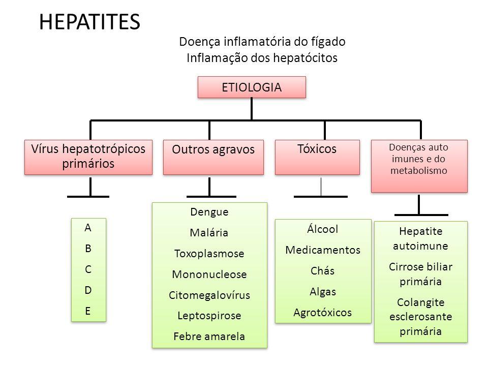 HEPATITES Doença inflamatória do fígado Inflamação dos hepatócitos ABCDEABCDE ABCDEABCDE Dengue Malária Toxoplasmose Mononucleose Citomegalovírus Leptospirose Febre amarela Dengue Malária Toxoplasmose Mononucleose Citomegalovírus Leptospirose Febre amarela Álcool Medicamentos Chás Algas Agrotóxicos Álcool Medicamentos Chás Algas Agrotóxicos Hepatite autoimune Cirrose biliar primária Colangite esclerosante primária Hepatite autoimune Cirrose biliar primária Colangite esclerosante primária ETIOLOGIA Vírus hepatotrópicos primários Vírus hepatotrópicos primários Outros agravos Doenças auto imunes e do metabolismo Tóxicos