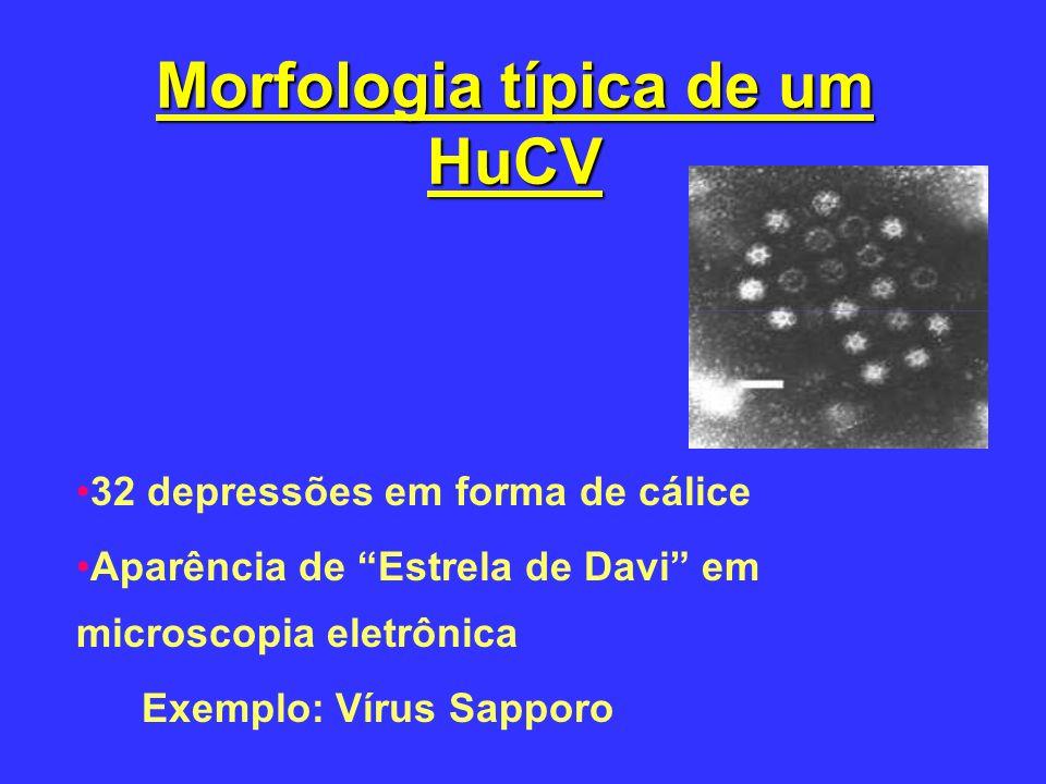 Morfologia típica de um HuCV 32 depressões em forma de cálice Aparência de Estrela de Davi em microscopia eletrônica Exemplo: Vírus Sapporo