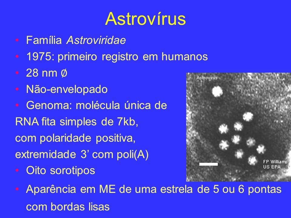 Astrovírus Família Astroviridae 1975: primeiro registro em humanos 28 nm Não-envelopado Genoma: molécula única de RNA fita simples de 7kb, com polarid