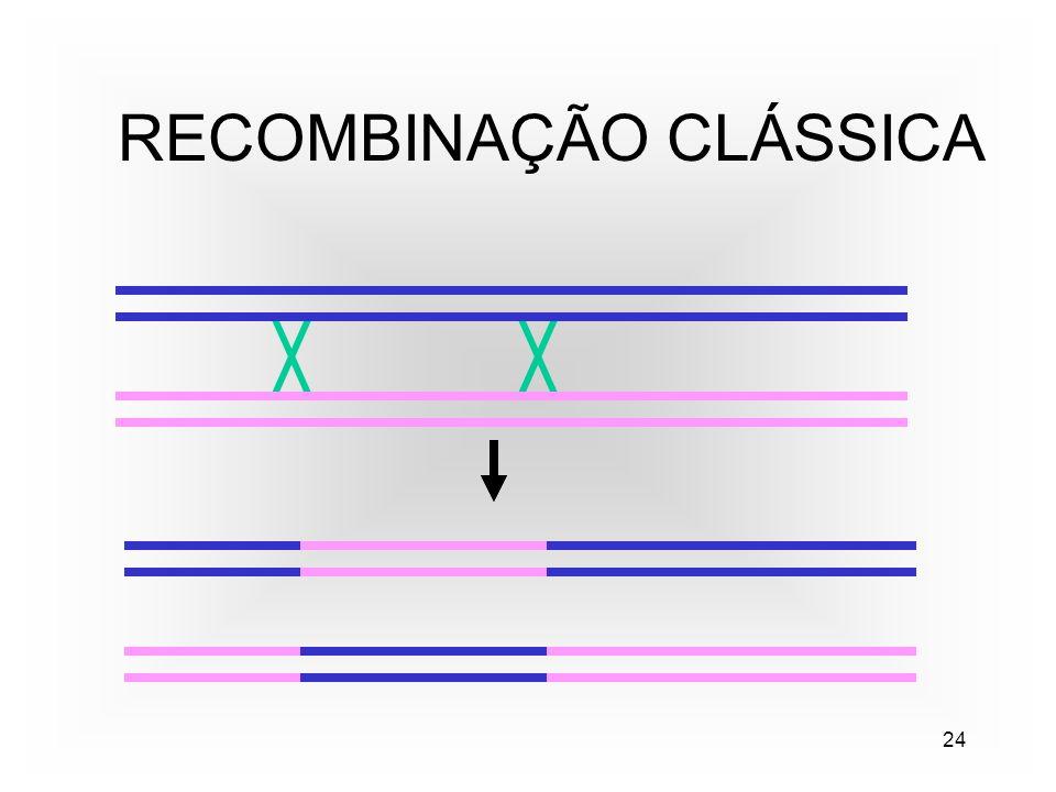 24 RECOMBINAÇÃO CLÁSSICA
