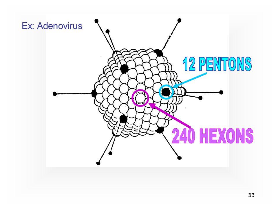 33 Ex: Adenovirus