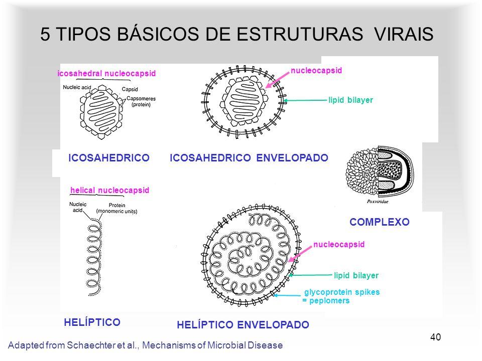 40 5 TIPOS BÁSICOS DE ESTRUTURAS VIRAIS HELÍPTICO HELÍPTICO ENVELOPADO ICOSAHEDRICO ENVELOPADO COMPLEXO ICOSAHEDRICO Adapted from Schaechter et al., M