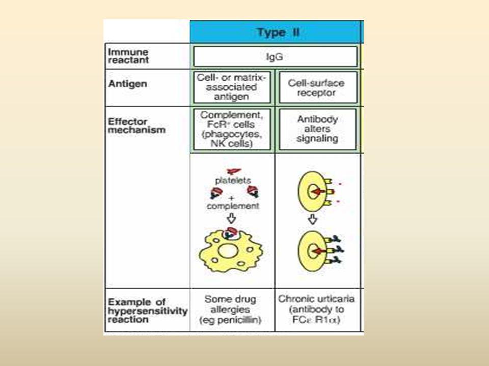 Hipersensibilidade Tipo II Mecanismo responsável pelas lesões teciduais nas reações citotóxicas Consiste primariamente da interação de Ac IgG ou IgM c