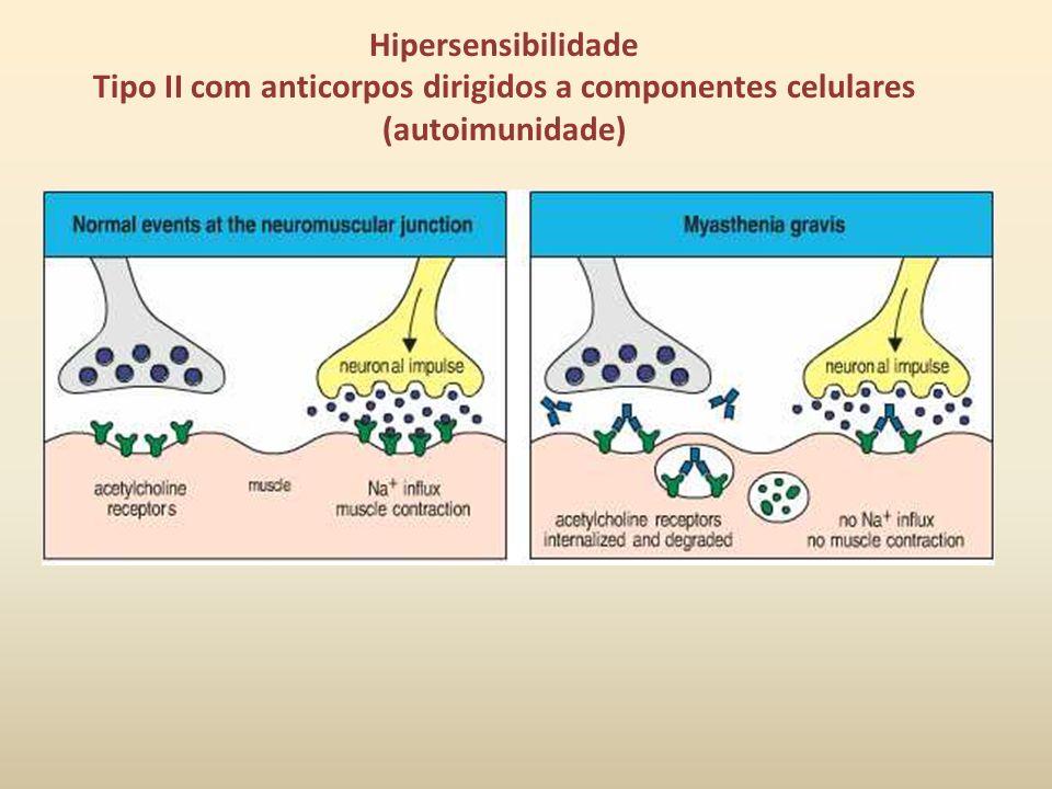 Citotoxicidade dependente de Ac e mediada por células (ADCC): Receptores para Fc de IgG em NK, macrófagos, neutrófilos e eusinófilos.