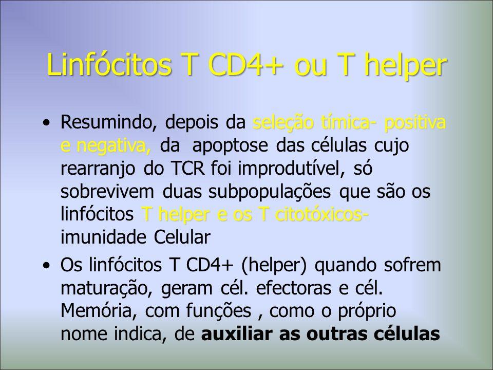 Linfócitos T CD4+ ou T helper seleção tímica- positiva e negativa, T helper e os T citotóxicos-Resumindo, depois da seleção tímica- positiva e negativ