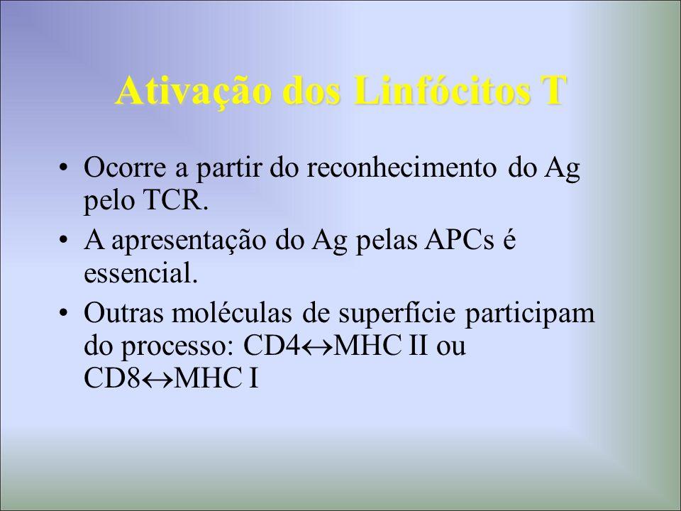 Ativação dos Linfócitos T Ocorre a partir do reconhecimento do Ag pelo TCR. A apresentação do Ag pelas APCs é essencial. Outras moléculas de superfíci
