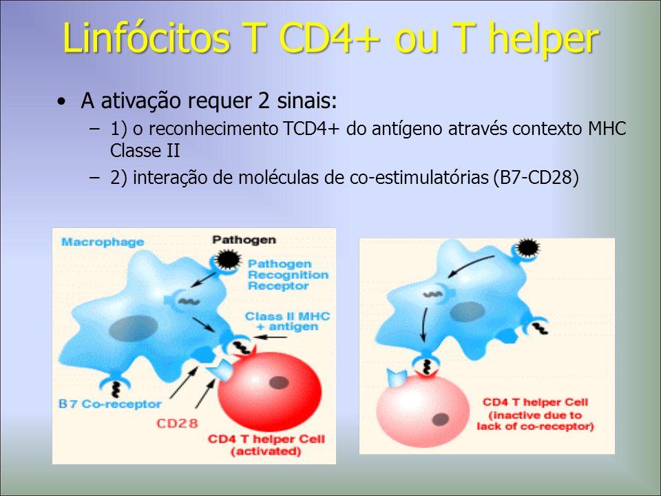 A ativação requer 2 sinais: –1) o reconhecimento TCD4+ do antígeno através contexto MHC Classe II –2) interação de moléculas de co-estimulatórias (B7-