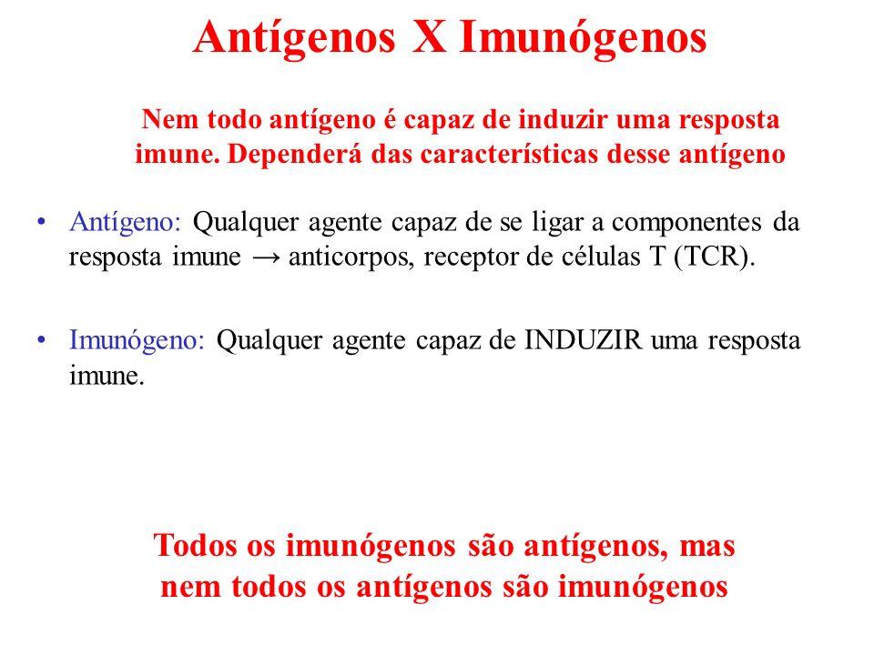 Antígenos X Imunógenos Antígeno: Qualquer agente capaz de se ligar a componentes da resposta imune anticorpos, receptor de células T (TCR). Imunógeno: