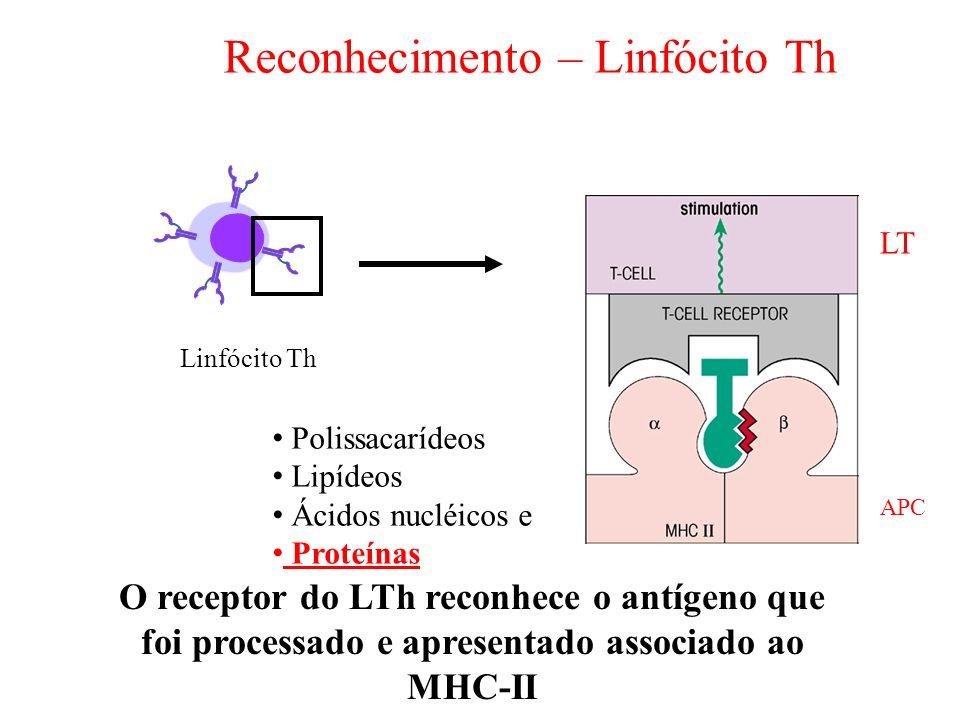 O receptor do LTh reconhece o antígeno que foi processado e apresentado associado ao MHC-II Reconhecimento – Linfócito Th Linfócito Th LT Polissacaríd