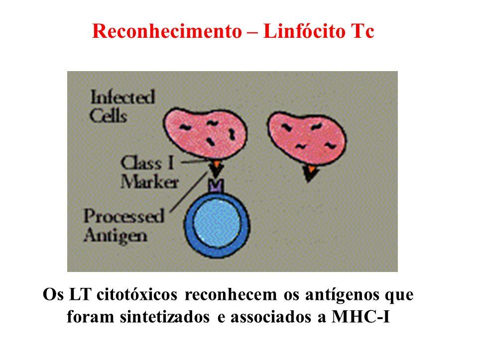Os LT citotóxicos reconhecem os antígenos que foram sintetizados e associados a MHC-I Reconhecimento – Linfócito Tc