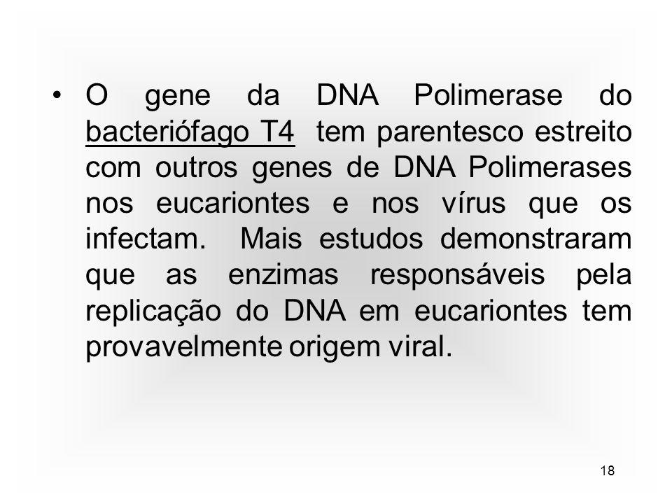 18 O gene da DNA Polimerase do bacteriófago T4 tem parentesco estreito com outros genes de DNA Polimerases nos eucariontes e nos vírus que os infectam.