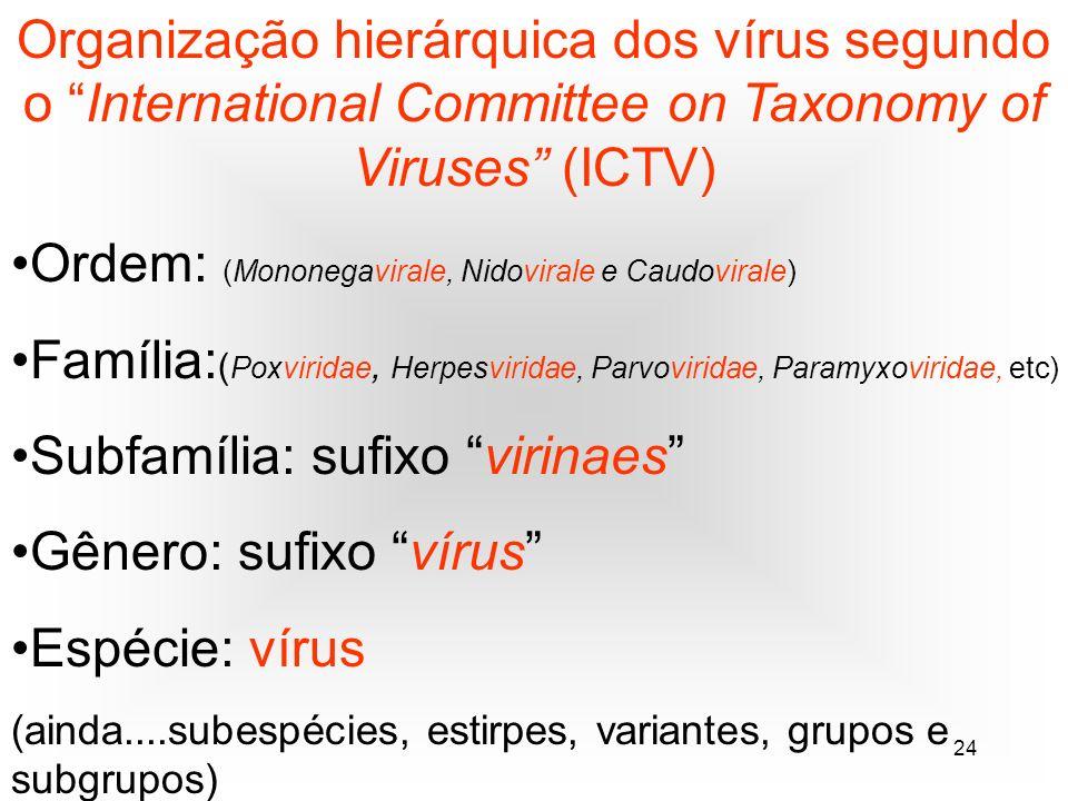 24 Organização hierárquica dos vírus segundo o International Committee on Taxonomy of Viruses (ICTV) Ordem: (Mononegavirale, Nidovirale e Caudovirale) Família: ( Poxviridae, Herpesviridae, Parvoviridae, Paramyxoviridae, etc) Subfamília: sufixo virinaes Gênero: sufixo vírus Espécie: vírus (ainda....subespécies, estirpes, variantes, grupos e subgrupos)