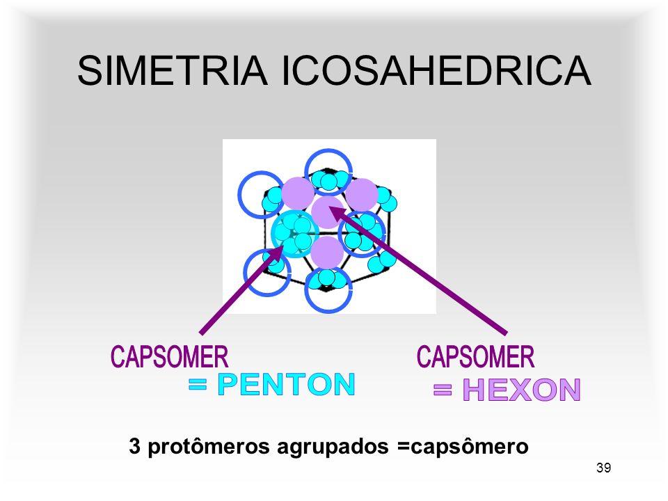 39 SIMETRIA ICOSAHEDRICA 3 protômeros agrupados =capsômero