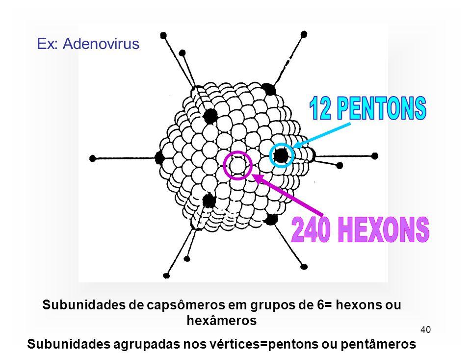 40 Ex: Adenovirus Subunidades de capsômeros em grupos de 6= hexons ou hexâmeros Subunidades agrupadas nos vértices=pentons ou pentâmeros
