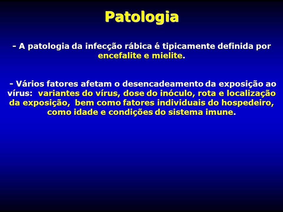 Patologia - A patologia da infecção rábica é tipicamente definida por encefalite e mielite. - Vários fatores afetam o desencadeamento da exposição ao