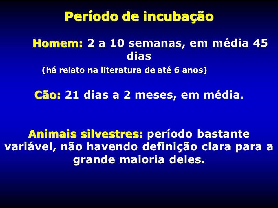 Período de incubação Homem: Período de incubação Homem: 2 a 10 semanas, em média 45 dias (há relato na literatura de até 6 anos) Cão: Cão: 21 dias a 2
