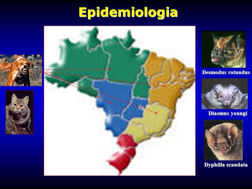 Epidemiologia Epidemiologia Desmodus rotundus Diaemus youngi Dyphilla ecaudata