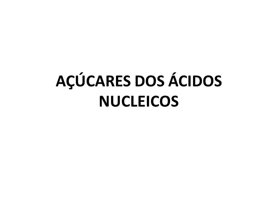 AÇÚCARES DOS ÁCIDOS NUCLEICOS