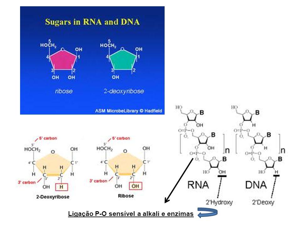 Ligação P-O sensível a alkali e enzimas