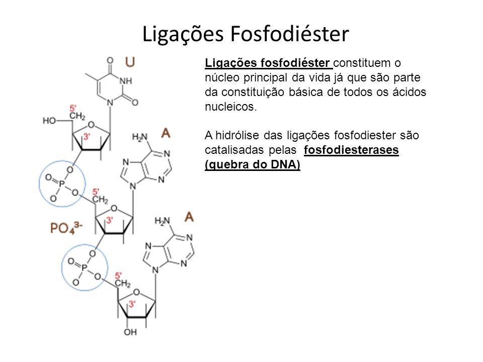 Ligações Fosfodiéster Ligações fosfodiéster constituem o núcleo principal da vida já que são parte da constituição básica de todos os ácidos nucleicos
