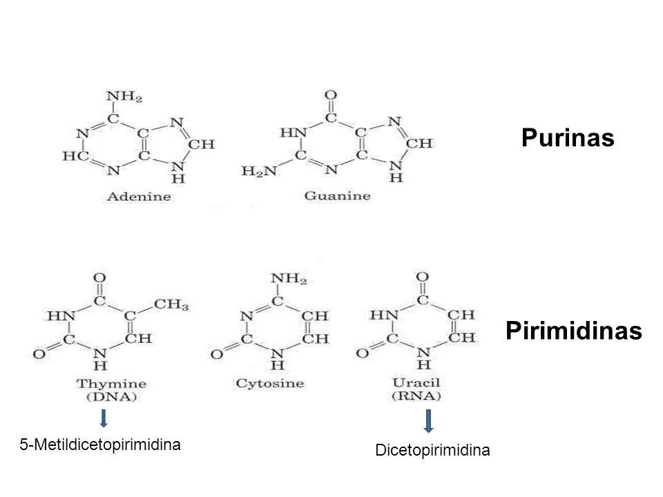 Pirimidinas Purinas 5-Metildicetopirimidina Dicetopirimidina