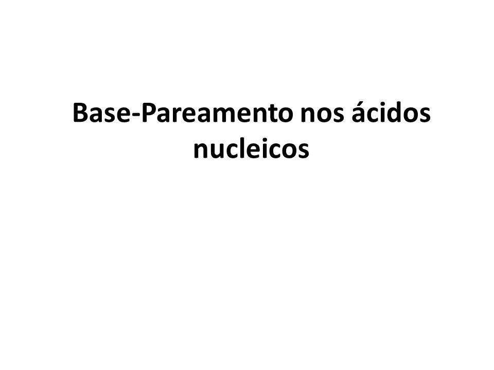 Base-Pareamento nos ácidos nucleicos