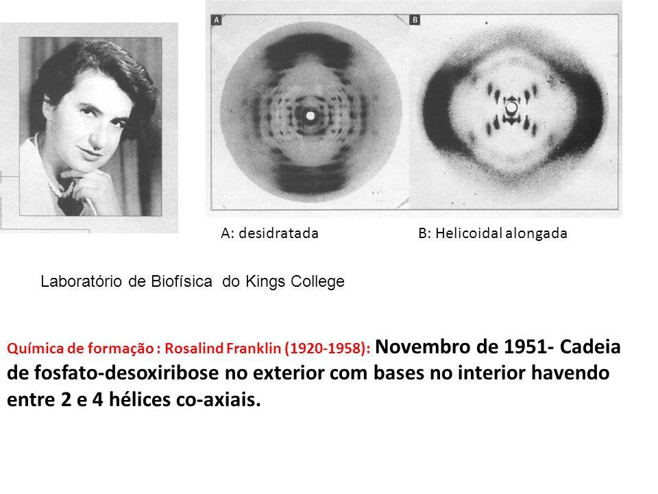 Química de formação : Rosalind Franklin (1920-1958): Novembro de 1951- Cadeia de fosfato-desoxiribose no exterior com bases no interior havendo entre