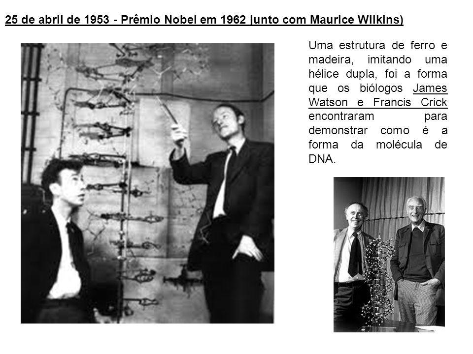 Uma estrutura de ferro e madeira, imitando uma hélice dupla, foi a forma que os biólogos James Watson e Francis Crick encontraram para demonstrar como