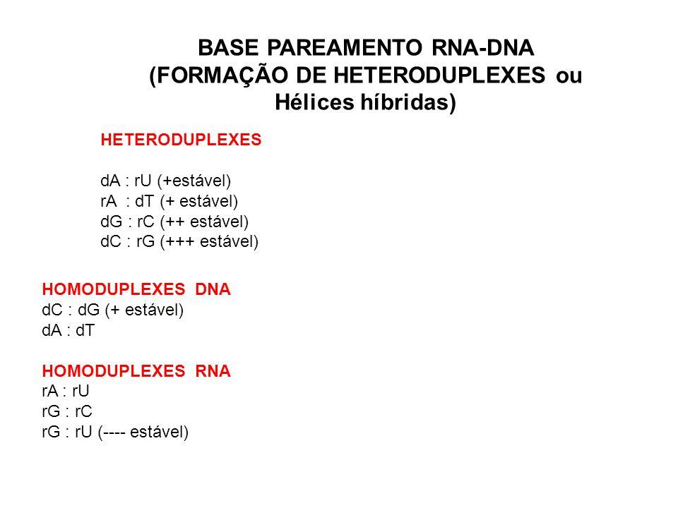 BASE PAREAMENTO RNA-DNA (FORMAÇÃO DE HETERODUPLEXES ou Hélices híbridas) HETERODUPLEXES dA : rU (+estável) rA : dT (+ estável) dG : rC (++ estável) dC