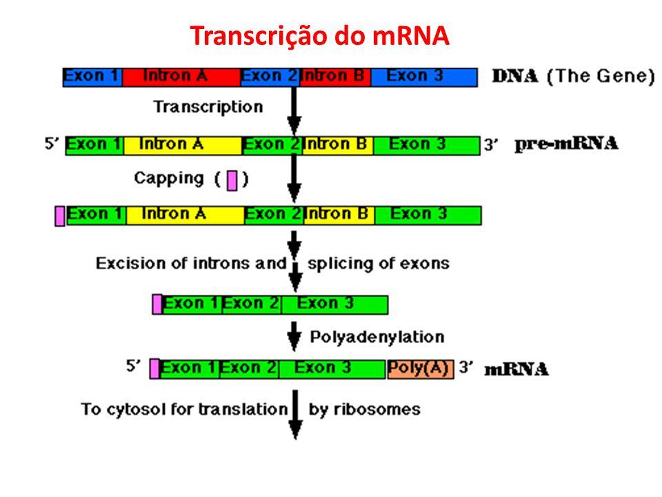 Transcrição do mRNA
