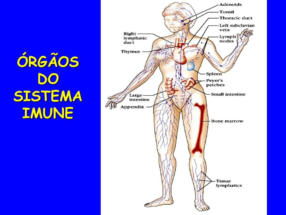 ÓRGÃOSDO SISTEMA IMUNE