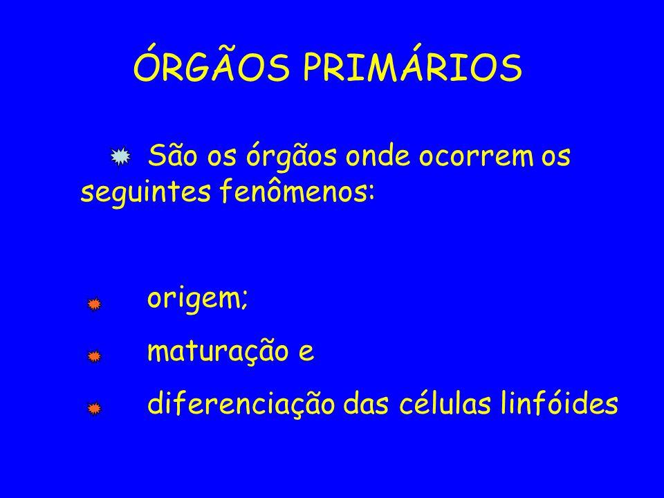 ÓRGÃOS PRIMÁRIOS São os órgãos onde ocorrem os seguintes fenômenos: origem; maturação e diferenciação das células linfóides
