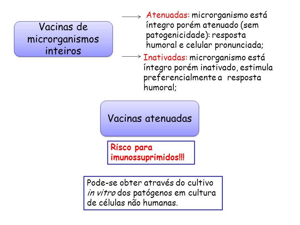 Vacinas de microrganismos inteiros Atenuadas: microrganismo está íntegro porém atenuado (sem patogenicidade): resposta humoral e celular pronunciada;