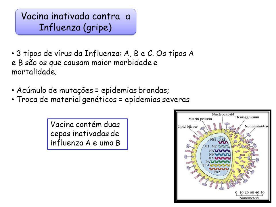 Vacina inativada contra a Influenza (gripe) 3 tipos de vírus da Influenza: A, B e C. Os tipos A e B são os que causam maior morbidade e mortalidade; A