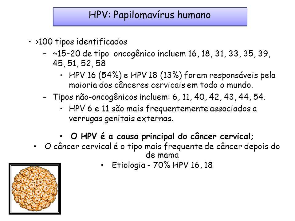 HPV: Papilomavírus humano >100 tipos identificados –~15–20 de tipo oncogênico incluem 16, 18, 31, 33, 35, 39, 45, 51, 52, 58 HPV 16 (54%) e HPV 18 (13