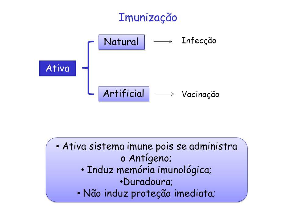 Ativa Natural Artificial Infecção Vacinação Ativa sistema imune pois se administra o Antígeno; Induz memória imunológica; Duradoura; Não induz proteçã