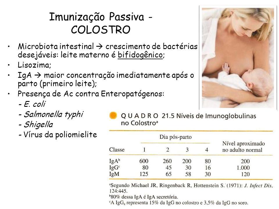 Imunização Passiva - COLOSTRO Microbiota intestinal crescimento de bactérias desejáveis: leite materno é bifidogênico; Lisozima; IgA maior concentraçã
