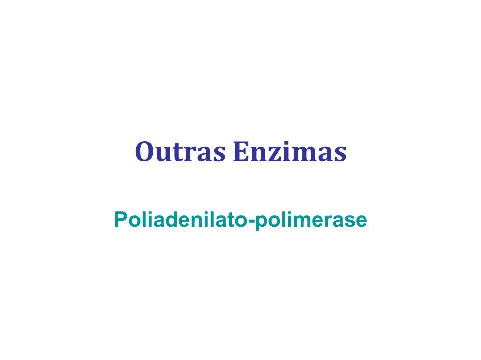 Outras Enzimas Poliadenilato-polimerase