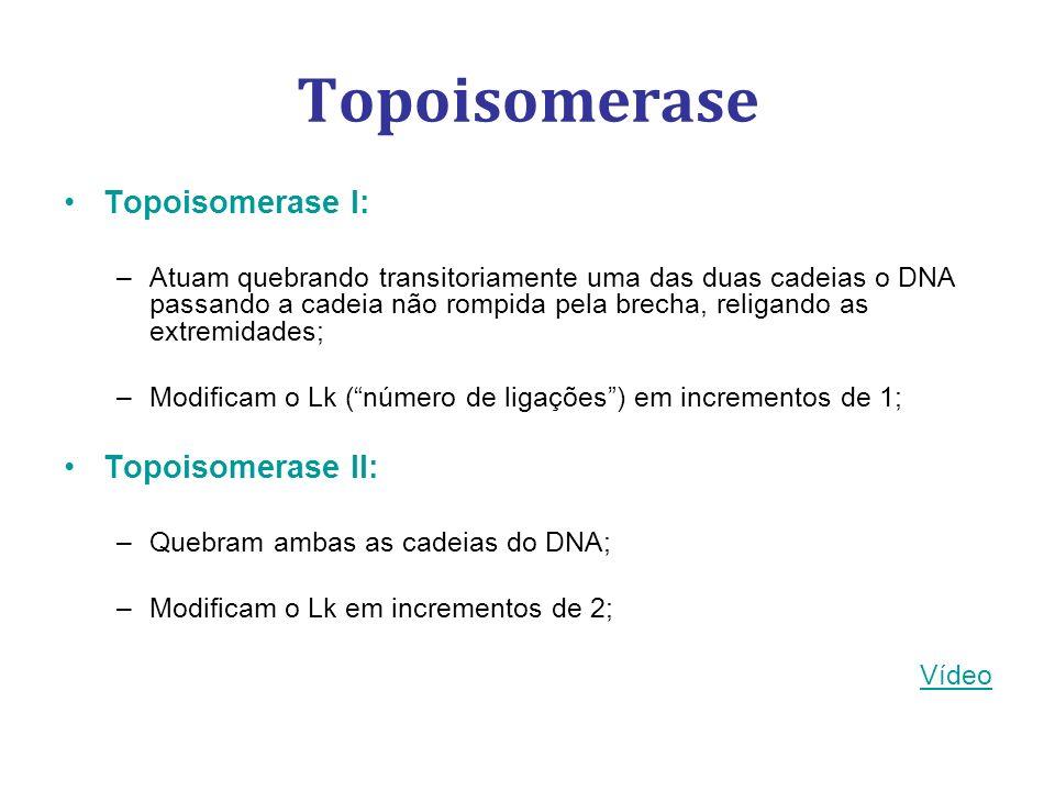 Topoisomerase Topoisomerase I: –Atuam quebrando transitoriamente uma das duas cadeias o DNA passando a cadeia não rompida pela brecha, religando as extremidades; –Modificam o Lk (número de ligações) em incrementos de 1; Topoisomerase II: –Quebram ambas as cadeias do DNA; –Modificam o Lk em incrementos de 2; Vídeo
